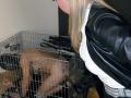 slave-training-degradation-11